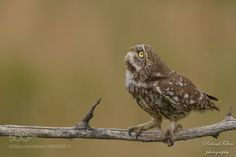 What's up there? by Roland-F #animals #animal #pet #pets #animales #animallovers #photooftheday #amazing #picoftheday