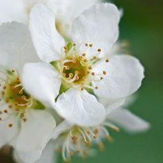 Finland, Gardens, Amazing, Flowers, Plants, Outdoor Gardens, Plant, Royal Icing Flowers, Flower