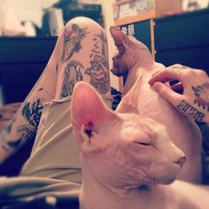 Holyyy hell it's the cat I want!!