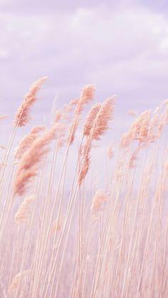 Pastel Crops