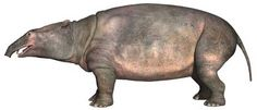 Moeritherium ('the beast from Lake Moeris') is a genus consisting of several extinct species. These prehistoric mammals are related to the elephant and, more distantly, the sea cow. They lived during the Eocene epoch.