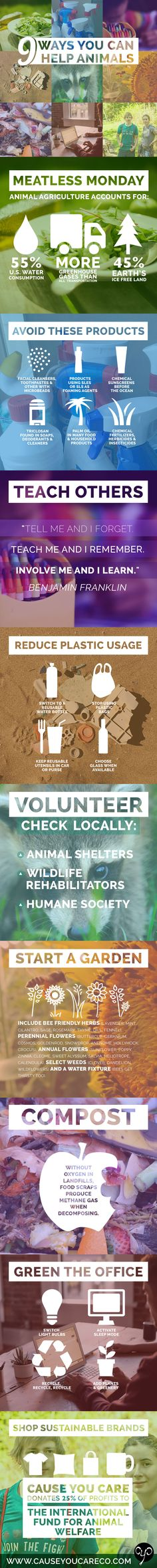 Looking for some ways that YOU can help save animals in your day-to-day? Learn about 9 things you can do to positively impact the planet and its wildlife. #infographic