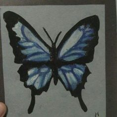 Pastel butterfly that didn't take much more then a couple hours. I only had a dark blue pastel so it was a little more difficult to get the colors i wanted