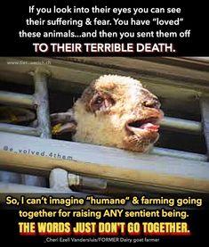 "The CONVENIENCE OF ANIMAL ""WELFARE"" ....#oxymoron #animalsdeservetolive #veganactivists #alllivesmatter #vegan #govegan #animalrights Animal Agriculture, Vegan Quotes, Why Vegan, Stop Animal Cruelty, Vegan Animals, Save Animals, Animal Welfare, Animal Quotes, Animal Rights"