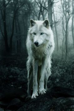 White wolf in the forest this is just amazing