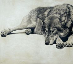 Grey Wolf I / Canis lupus / 2010 / 61 x 70 cm / Pencil on panel Deco House, Wolf Hybrid, African Bush Elephant, Amur Leopard, Wolf Painting, Animal Sketches, Painting Videos, Pen Art, Easy Drawings