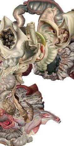 Anthropomorphe: Decorative Anatomy