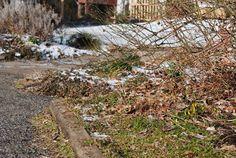 Driveway Garden - March 5th