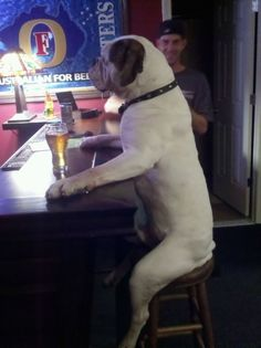 Now this is why dogs are a mans best friend. What other animal could just sit and chill out at a bar like this?