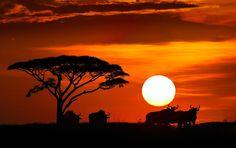 Savanna sunset  -