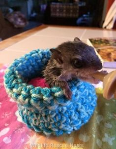 People Are Knitting Cozy Little Nests For Rescued Baby Animals