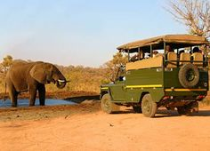 Looking for best Tanzania safari tours? We are at Orongai Africa providing best Tanzania safari tours and trips in Africa. Contact us to get best Tanzania safari packages at at affordable cost. African Animals, African Safari, Uganda, Minibus, Tanzania Safari, Wildlife Safari, Game Reserve, Wild Dogs, East Africa