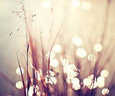 heart the light