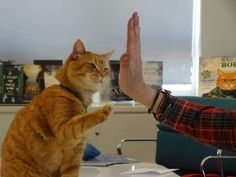 Classic High Five :-) - from FB page James Bowen & Street Cat Bob Crazy Cat Lady, Crazy Cats, Kittens Cutest, Cats And Kittens, Tabby Cats, Kitty Cats, A Cat Named Bob, I Love Cats, Cute Cats