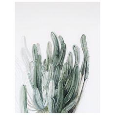 5 0  s h a d e s  o f  g r e e n •   #cacti
