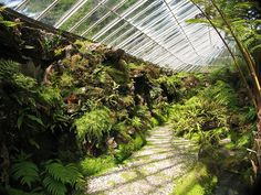 Ascog Hall Fernery, Isle of Bute