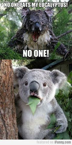 No One Eats My Eucalyptus! the one on top is scary