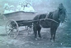 Pony Cart.