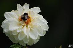 #kwiaty #fotografia #owady