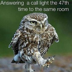 Nurse humor ~ better put that smile on your face every time! Cute Funny Animals, Cute Baby Animals, Animals And Pets, Beautiful Birds, Animals Beautiful, Hospital Humor, Nursing Memes, Funny Nursing, Nursing Quotes