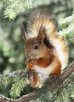 I actually do help myself to some nuts now and then, but I'm too cute to be in much trouble - right?