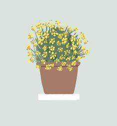 Plantas de interior y exterior con grandes beneficios 🌿