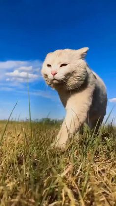 Funny Cute Cats, Cute Baby Cats, Cute Kitten Gif, Cute Little Animals, Cute Cats And Kittens, Cute Funny Animals, Kittens Cutest, Funny Animal Images, Funny Animal Videos