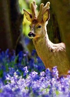 Also deer