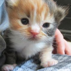 This is Lunchbox Loki! Read her full story (it's quite something!) on www.goodmorningkitten.com today.