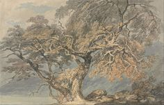 Joseph Mallord William Turner - A Great Tree, circa 1796