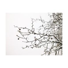 ❤ liked on Polyvore featuring backgrounds, flowers, winter, pictures and trees