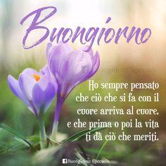 Italian Greetings, Good Morning, Plants, Cards, Genere, Chiffon, Wallpapers, Blog, Frases