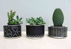 Cactus and succulents in adorable black chalkboard pots with hand drawn flair DIY Cacti And Succulents, Planting Succulents, Potted Plants, Garden Plants, Indoor Plants, Planting Flowers, Succulent Planters, Plant Pots, Herb Garden