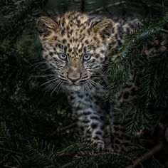 Young Adventurer by Paul Keates on 500px