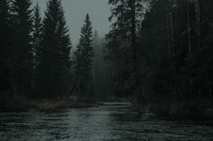 Dark Green Aesthetic, Night Aesthetic, Nature Aesthetic, Slytherin Aesthetic, Dark Paradise, Dark Forest, Aesthetic Pictures, Twilight, Beautiful Places