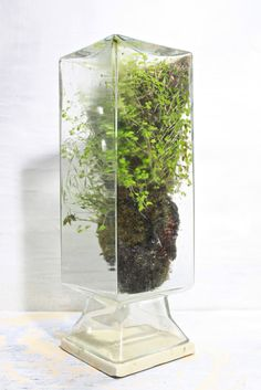 island in the sky - the slug and the squirrel ..... upside down glass vase canister as a terrarium .... hmm, use a pretty ceramic tile to seal