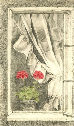 Red Geranium Window Pencil Print  Print from an by AlisaPaints