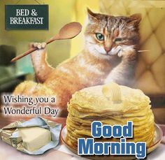 #Goodmorning everyone! Serve some #kittylove to your loved ones as they still lie in bed with this cute #cat #ecard.