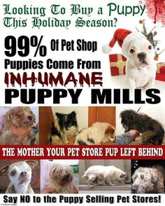 Looking To Buy A PUPPY This Holiday Season? 99% of Pet Shop Puppies Come From INHUMANE PUPPY MILLS