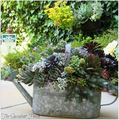 Container Gardening#: Watering can brimming with beautiful succulents