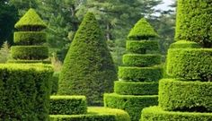 Whimsical topiary