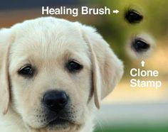 Guida Completa Agli Strumenti Di Clonazione Di Photoshop