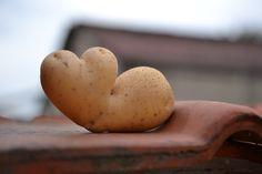 Eigen kweek... aardappel.
