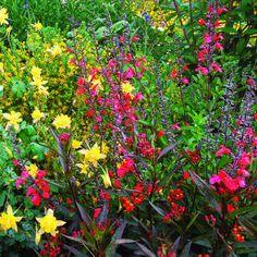 Hummingbird And Butterfly Garden