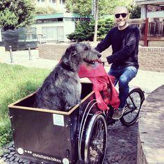 #christianiabikes #cargobike #irishwolfhound