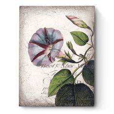 "Sid Dickens - Morning Glory -""Gentle and strong blooms, twisting and navigating through the twists and turns of life's array. Original Collectibles, Drawings, Hand Painted, Artist, Image, Painting, Decoupage, Houston Llew"