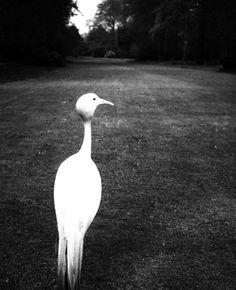by Bill Brandt: Evening in Kew Gardens, London 1932-1935