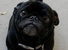 Otis! - what a cutie