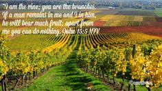 Joh15:5 stay connected with the Vine