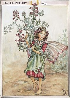 Illustration for the Fumitory Fairy from Flower Fairies of the Wayside. A girl fairy walks towards the right holding up her overdress and a spray of fumitory.    Author / Illustrator  Cicely Mary Barker